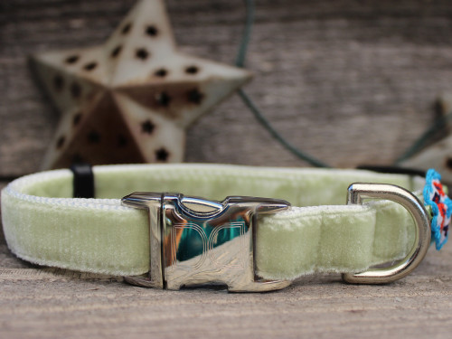 Dori dog collar - by Diva-Dog.com