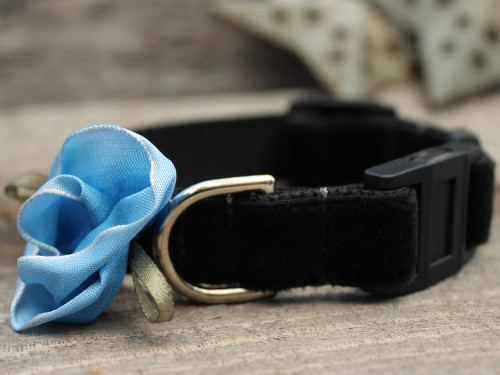 Carnation Blue cat collar by www.diva-dog.com