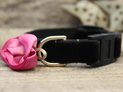 Carnation Orchid cat collar by Diva-Dog.com