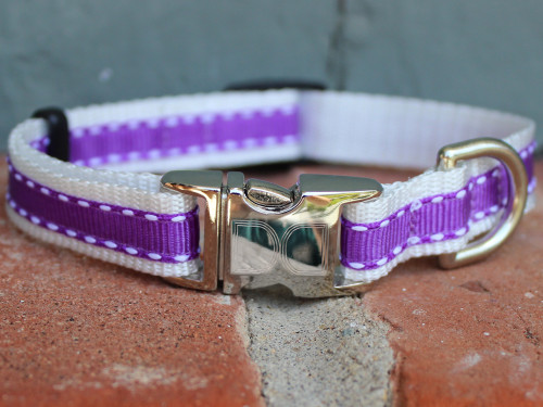 Preppy in Purple Dog Collar - by Diva-Dog.com