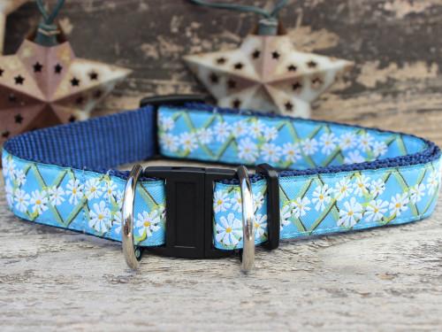 Daisy dog collar with breakaway safety buckle by www.diva-dog.com