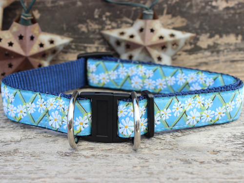 Daisy dog collar with breakaway safety buckle by www.diva-dog.com