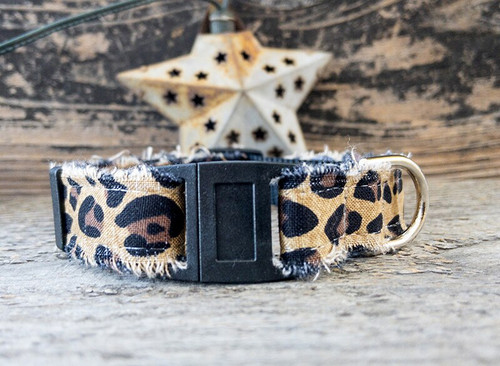 Bad Kitty cat collar by www.diva-dog.com