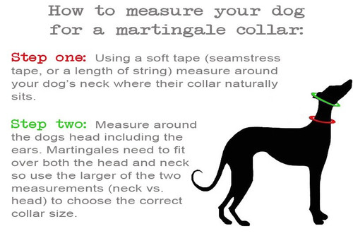 How to measure for a martingale dog collar.