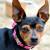 Rosebud Pink Velvet Dog Collar - by Diva-Dog.com