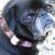 Argyle dog Collar - by Diva-Dog.com