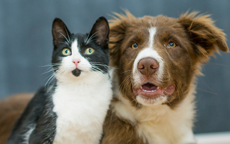 dogandcat2.jpg