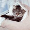 Medium Natural Sleeping Bag for CATS. Cozy, Washable, and Reversible. Organic Cotton Snuggle Sack. Plastic Free/ Dye Free Cat Sleep Sack.