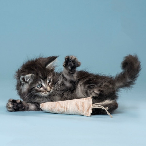 A fluffy kitten pounces on our organic cotton filled cat toy.  Made with love in the USA.