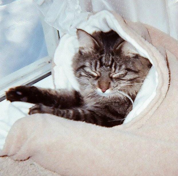 organicsleepsac-cats.jpg
