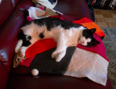 Cat sleeping on soft colorful wool pet blanket