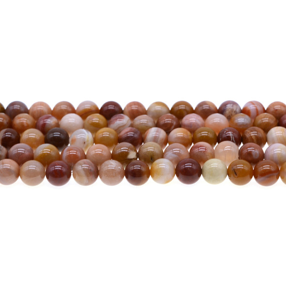 Petrified Fossil Wood Agate Round 8mm - Loose Beads