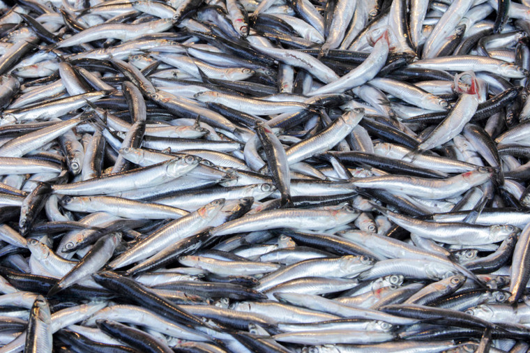 Anchovy (Nethili) 2 Lb Packet Daily Delight