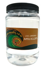 Apocyclops copepods. Live APE saltwater pods for sale with free shipping. Aquarium live food