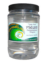 Buy Pseudo Copepods for Sale Get Live fish Food Copepods zooplankton Pods Coral Food