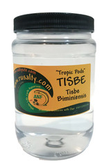 Tisbe Pods Copepods for Sale. Buy Tisbe or Tisbe biminiensis Copepods to feed mandarin fish and saltwater aquarium.