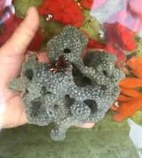 Spotted encrusting Large specimen Live sea sponge