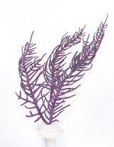 Purple frilly Gorgonian for sale. Buy live gorgonians for saltwater tanks.