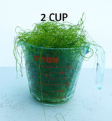 Chaetomopha Chaeto Macro Algae 2 Cup Saltwater Marine Plants copepods Amphipods