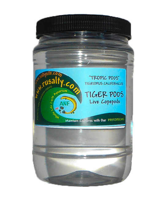 Tigger Pods For Sale Live copepods Fish Food Tiger Pods Buy Mandarin Fish Food Seahorse