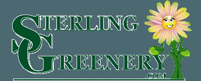 Sterling Greenery