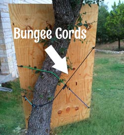 bungee-cords-to-secure-game.jpg