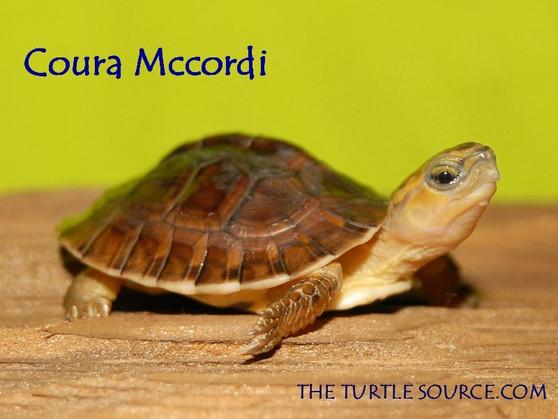 McCord's  Box  turtle showing his charm.