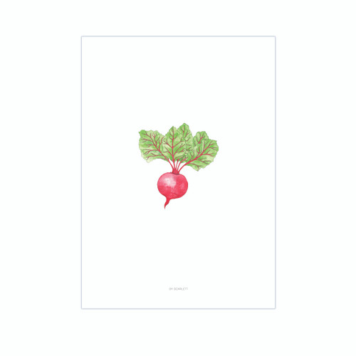 Home Grown Collection A3 Print - Up Beet