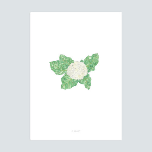 Home Grown Collection A3 Print - Cauliflower Dreaming