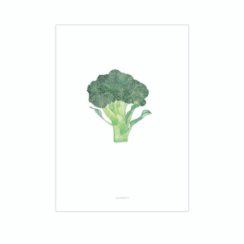Broc On A3 Print  - Home Grown Collection