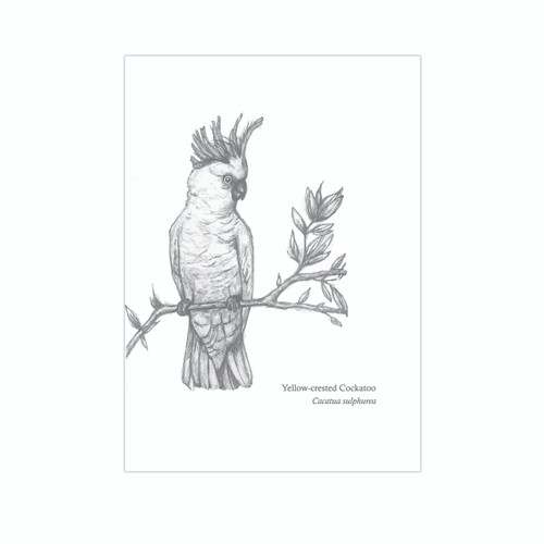 The BirdLife Collection: Yellow - crested Cockatoo - A3 Print