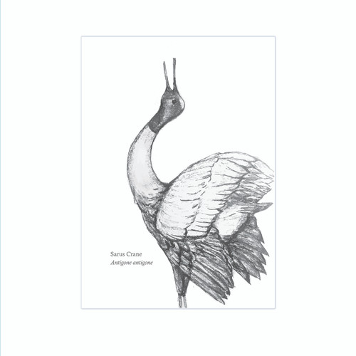 The BirdLife Collection: Sarus Crane - A3 Print