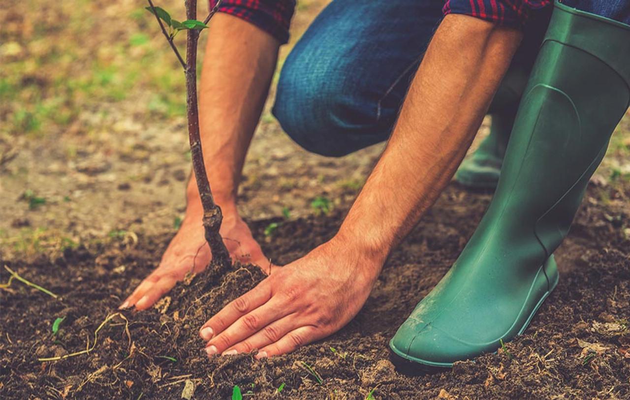 Buy Socks. Plant Trees!