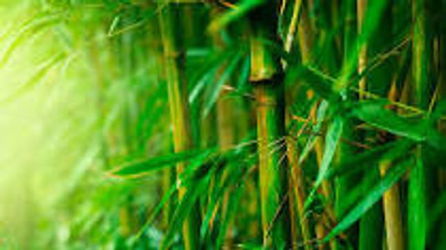 Top 8 Benefits of Wearing Bamboo Socks