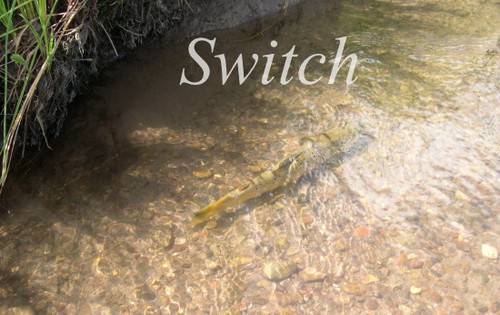 "Switch Fly Rod Blank 11'0""  4pc"