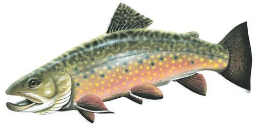 Brook Trout Sticker