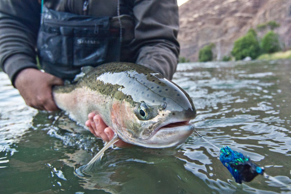 Deschutes Steelhead- photo courtesy of Direct Adventures