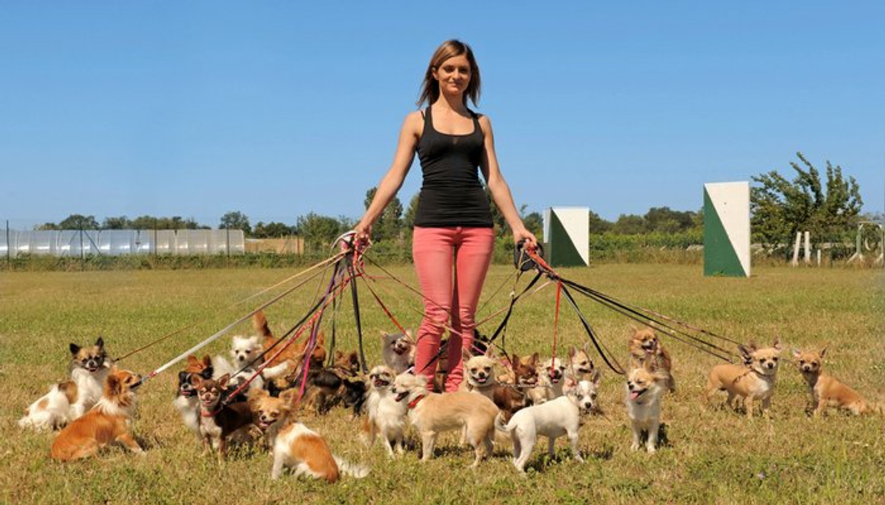 Fanny Pack For Dog Walkers: Perfect for Treats, Walking and Fun