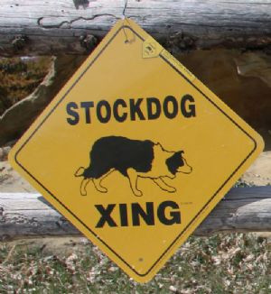 Stockdog Xing