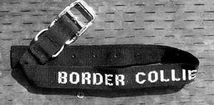Border Collie Collar