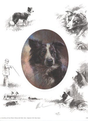 Oval Border Collie Collage