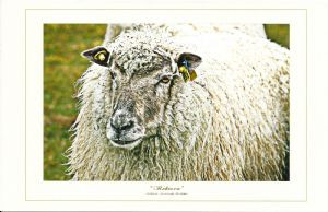 """Rebecca"" Note Card by Vickie Atkins Close"