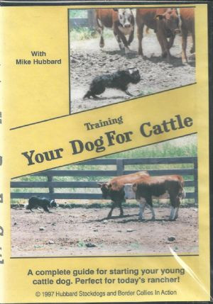 Training Your Dog For Cattle
