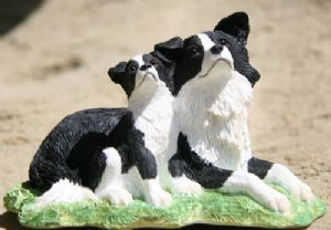 Border Collie & Pup