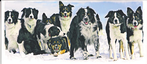 """Dogs in Snow"" Note Card by Vickie Atkins Close"