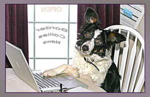 """Working Dog"" Note Card by Vickie Atkins Close"