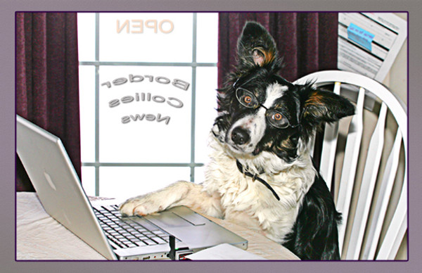 """""""Working Dog"""" Note Card by Vickie Atkins Close"""