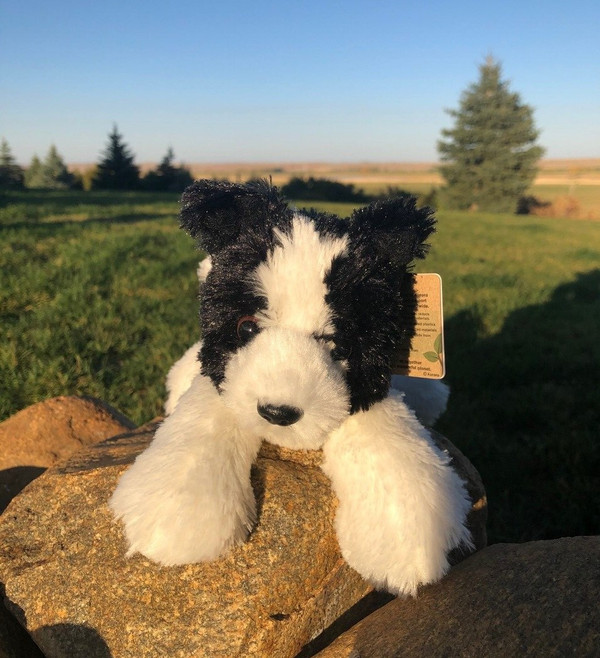 Cami - New Border Collie Toy