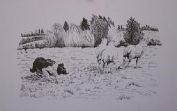Tess with 3 Sheep