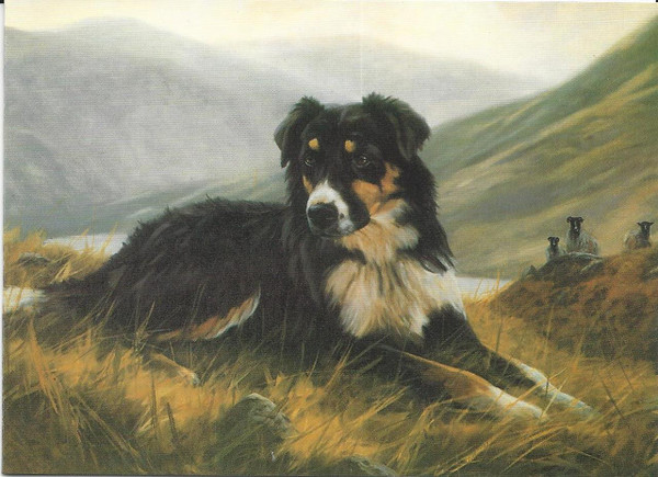 Tri Color Collie Note Card